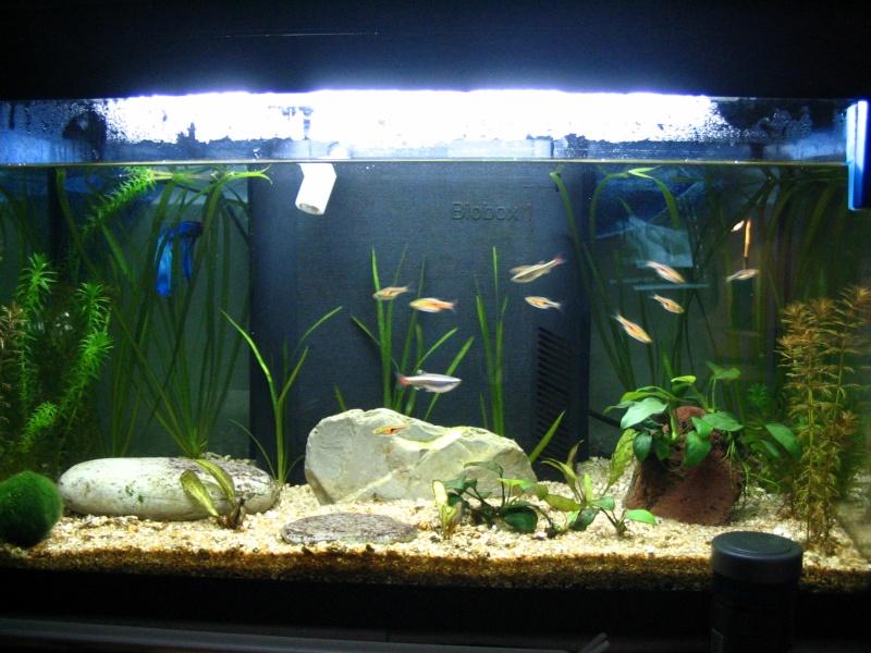 Le tour de l 39 aquariophilie for Poisson aquarium 60l