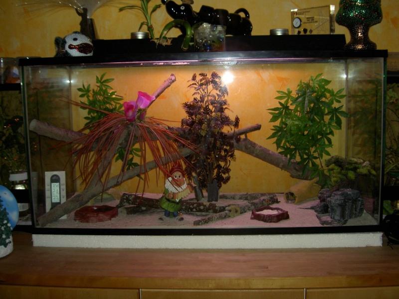 mon terrarium à geckos Pict1410