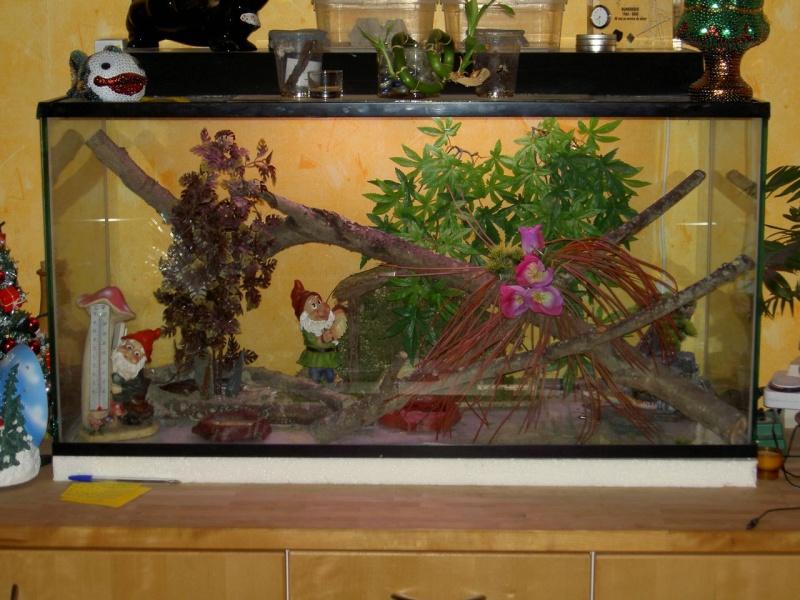 mon terrarium à geckos Pict1510