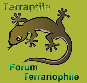 Terraptile