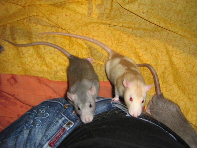 Rats, souris, différence et cassage de mythes Img_3030