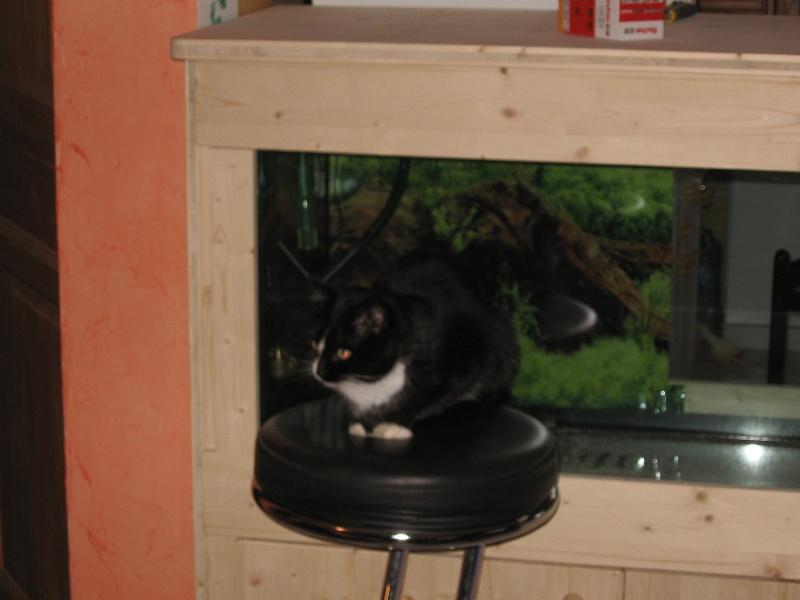 aquari11.jpg