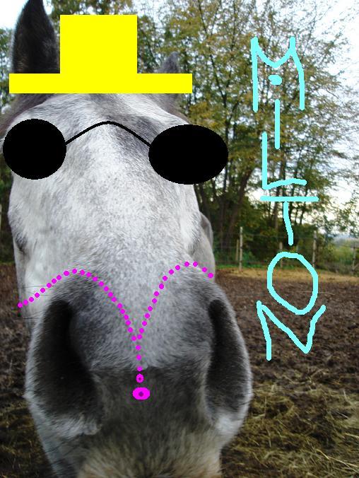 >>>Concours des chevaux n°1 !!! Milton10