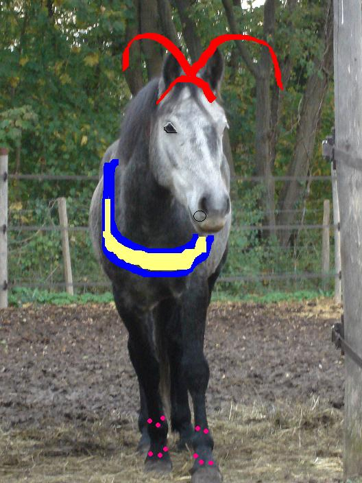 >>>Concours des chevaux n°1 !!! Re_mym10