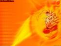 Dragon Ball Z Photo_16