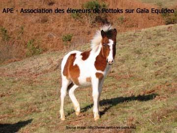 Association d'éleveurs de Pottoks