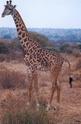 LA GIRAFE Girafe10