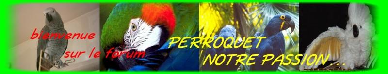 perroquet notre passion