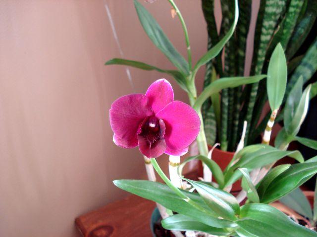 Floraisons - Janvier Dendro10