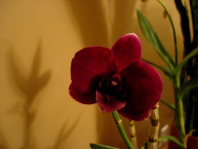 Floraisons - Janvier Dendro11