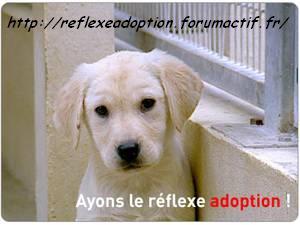 ANIMAUX : Reflexe Adoption !