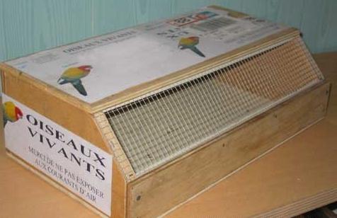 transport d 39 un oiseau eam. Black Bedroom Furniture Sets. Home Design Ideas