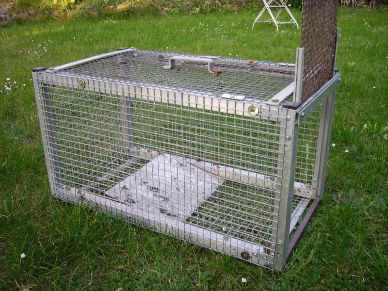 Cage ragondin - Fabrication glue pour chasse ...