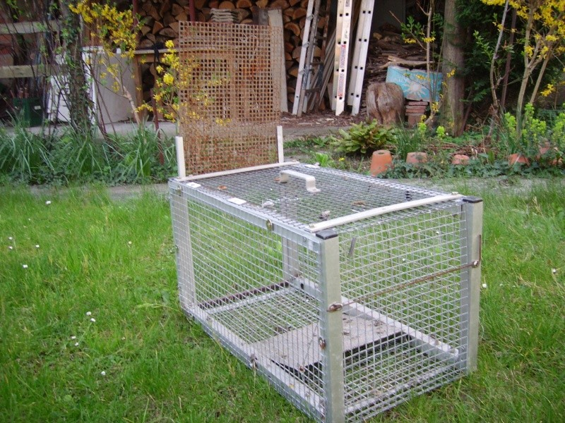 cage à ragondin