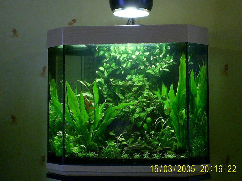 Mon aquarium ouvert avec lampe hqi 250 litres for Aquarium ouvert