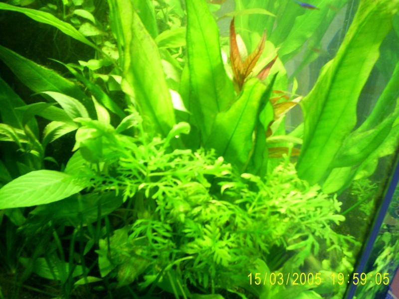 Mon aquarium ouvert avec lampe hqi 250 litres page 2 for Aquarium ouvert
