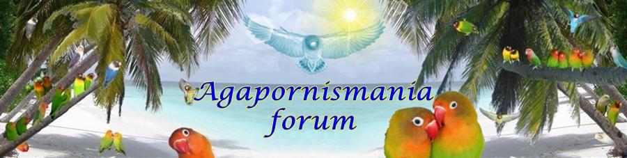 forum di Agapornismania