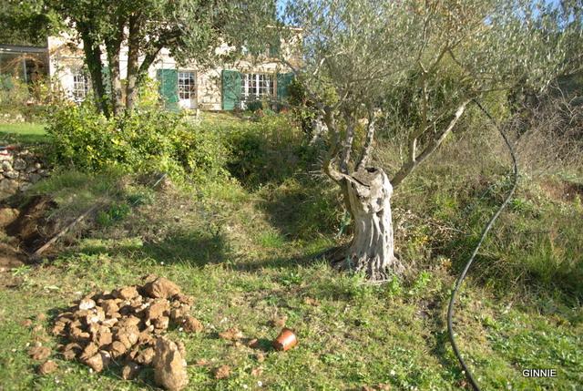 Petite cascade jardin embellir jardin design de maison - Petit jardin luxuriant poitiers ...
