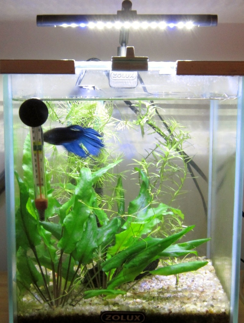 Kit aquarium pour betta for Aquarium 20 litres poisson rouge