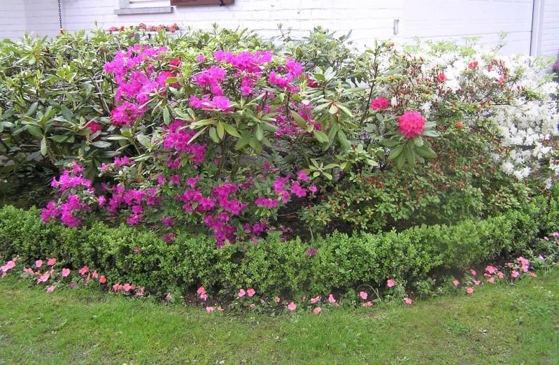 Quelle vari t de rhododendron choisir au jardin forum de jardinage - Quelle variete de lavande choisir ...