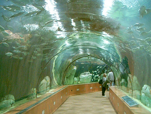 les grands aquariums
