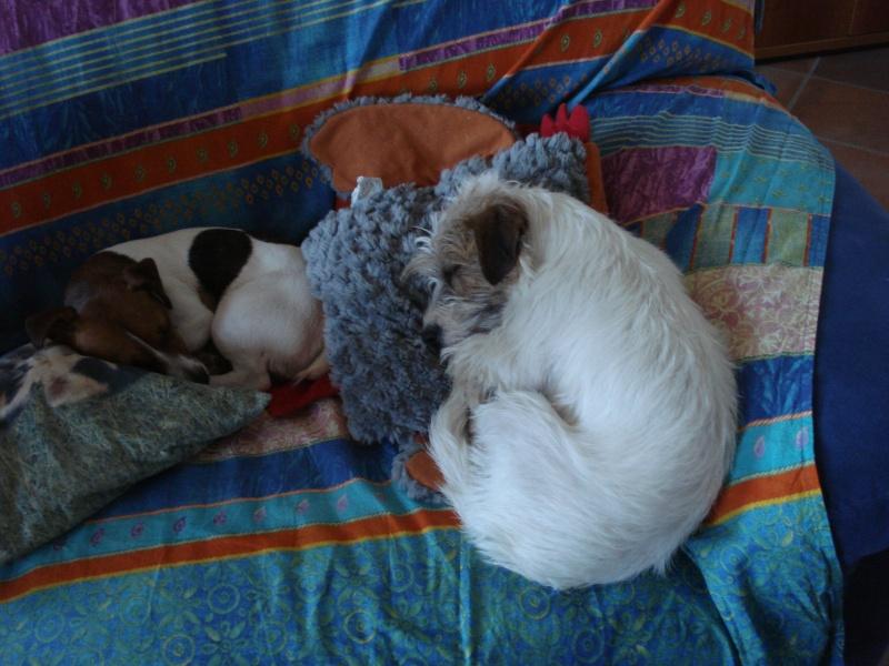 Mai i cani sul divano direttamente sul letto lady music e trilly - Pipi sul divano ...