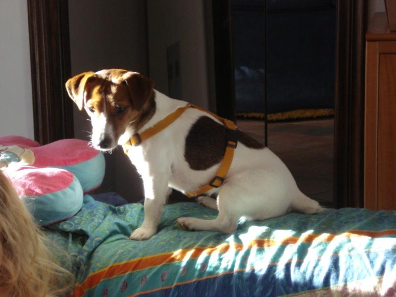 Mai i cani sul divano direttamente sul letto lady music e trilly - Perche i cani scavano sul divano ...