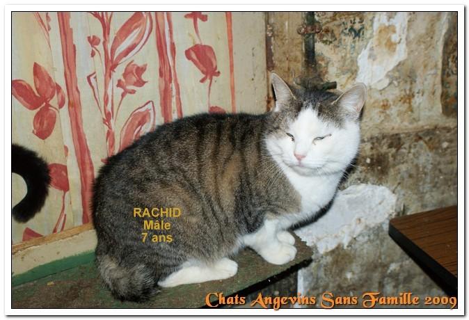 rachid12.jpg