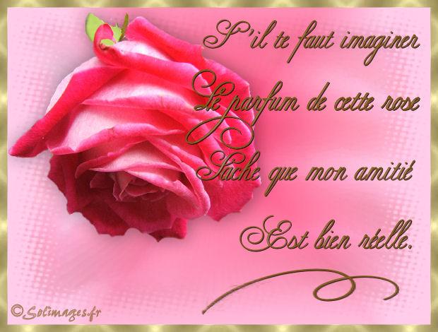 rose-p10.jpg