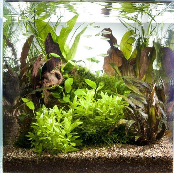 quelques exemples de plantation de bac betta. Black Bedroom Furniture Sets. Home Design Ideas