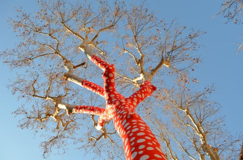 Aix en provence des arbres rouges petits pois - Arbre provencal ...