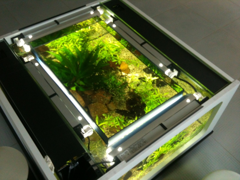 recifalfrance • Ma table basse 300l ! (Aquadrien)  vos bacs et vos bassins -> Aquarium Table Basse Pas Cher