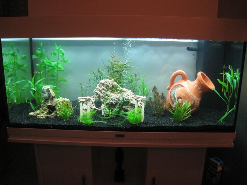 déco aquarium sans eau
