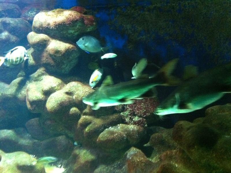 L 39 aquarium de b le for Vendeur aquarium