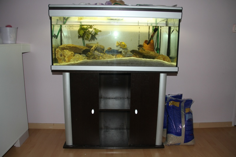 Vend aquarium 180l meuble 93 for Vend aquarium